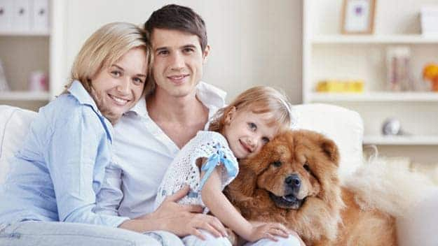 Wills & Trusts dog-young-family Direct Wills Brixham